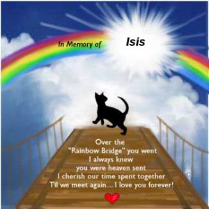 A personalized pet memorial poem copia