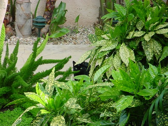 Isis Peeking Through The Plants.