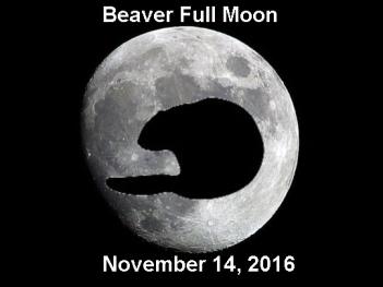 beaver-moon-copia