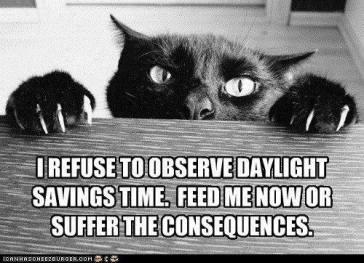 daylight-savings-cat
