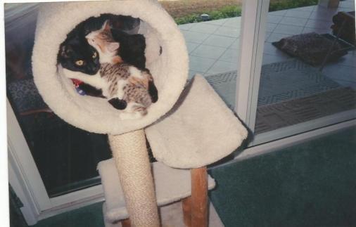 Isis and Tigre sleeping.jpg